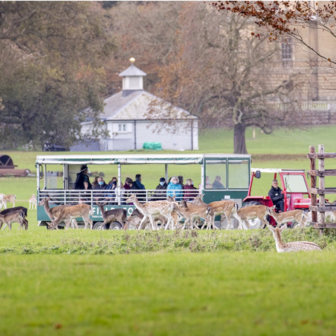 <p>From nature walks to trailer tours, discovering behind the scenes in the Hall to family fun activities, there is bound to be something to take your fancy! </p>
