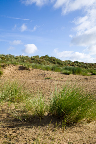 Dune Discovery | Venture out for two hours this Sunday morning to Holkham beach and find out everything you ever wanted to know about dunes but were afraid to ask!  | Holkham Hall, Wells next the Sea, Norfolk, North Norfolk