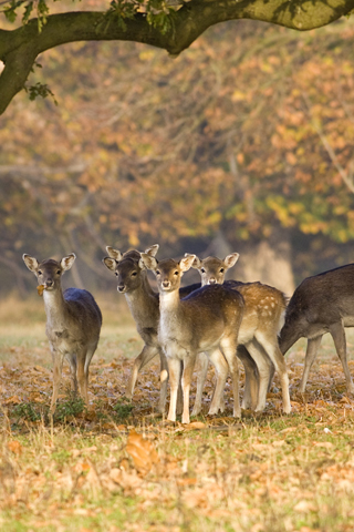Deer and Wildlife Safari, Holkham Estate, Wells-next-the-Sea, Norfolk, NR23 1RH | Climb on board our tractor-trailer and explore our deer park! | Animals, nature, wildlife, families, tractor, deer, tour