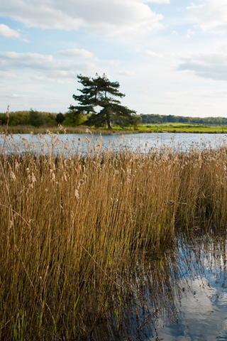 Nature Reserve Guided Walks, Holkham National Nature Reserve, North Norfolk Coast | Take in the seasonal highlights and points of interest of the Holkham National Nature Reserve | guided walk, nature, wildlife