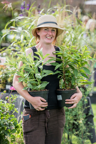 The annual Plant Fair at Holkham in September