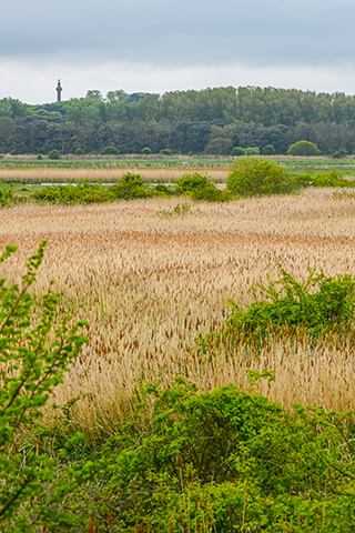 Reserve Ramble | Join us on guided walks around the Holkham National Nature Reserve, Burnham Overy Staithe and Burnham Norton - Dalegate Market | Shopping & Café, Burnham Deepdale, North Norfolk Coast, England, UK