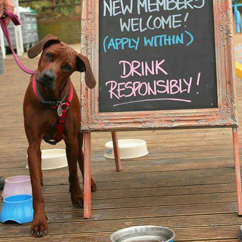 The Beach Café is dog friendly